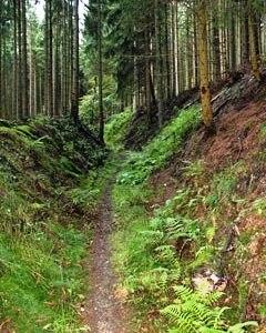 Durch diese hohle Gasse muss er kommen – das wusste Schillers Wilhelm Tell schon. Diesen Hohlweg aber haben die Waldarbeiter mit dem Pferd durch das Holz-Rücken gebildet.