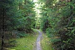 Der schmale Pfad über die Himmelskrone schlängelt sich durch dichten Waldbestand: Ruhe pur.